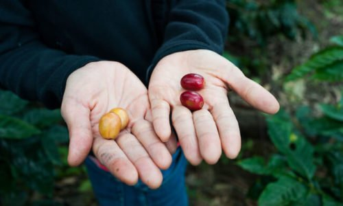 How to Find the Best Organic Coffee Beans