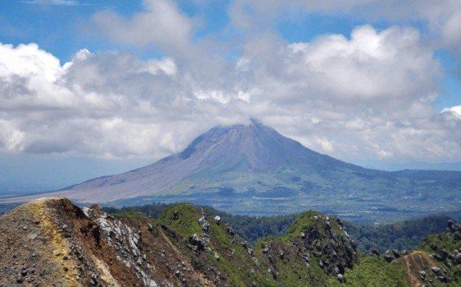 Coffee plantation on volcano Indonesia